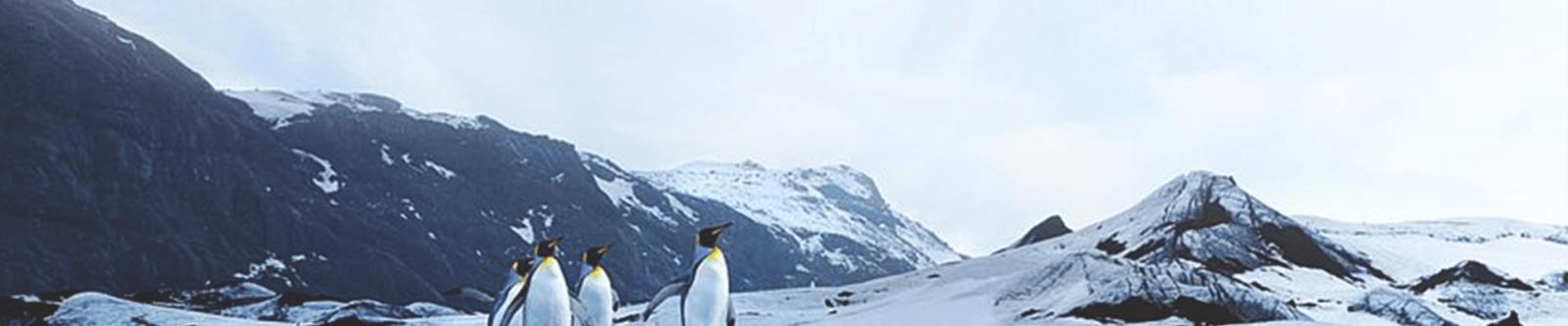 от арктики до антарктики
